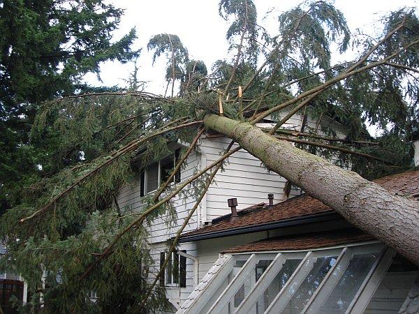 urgent tree removal