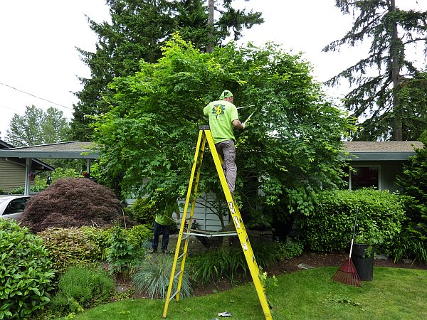 Jd Tree Service Tree Pruning Tree Trimming Serving